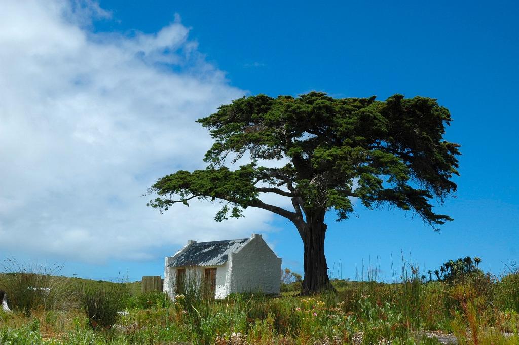albero-casetta